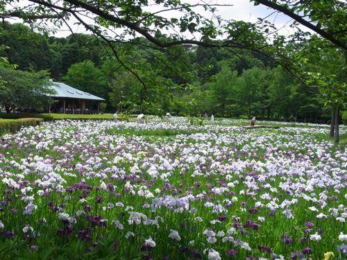 袖ヶ浦公園4