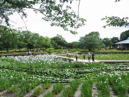 袖ヶ浦公園5