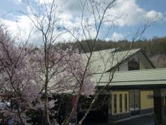 滝見・桜2
