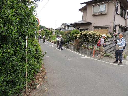 150526negishi20.jpg
