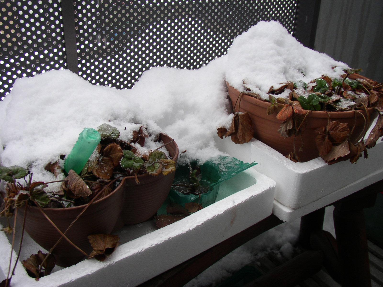 3月始め名残雪