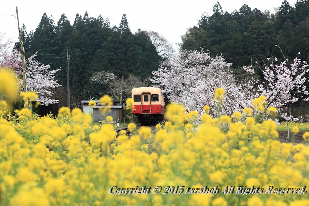 20150401-5D_09463.jpg