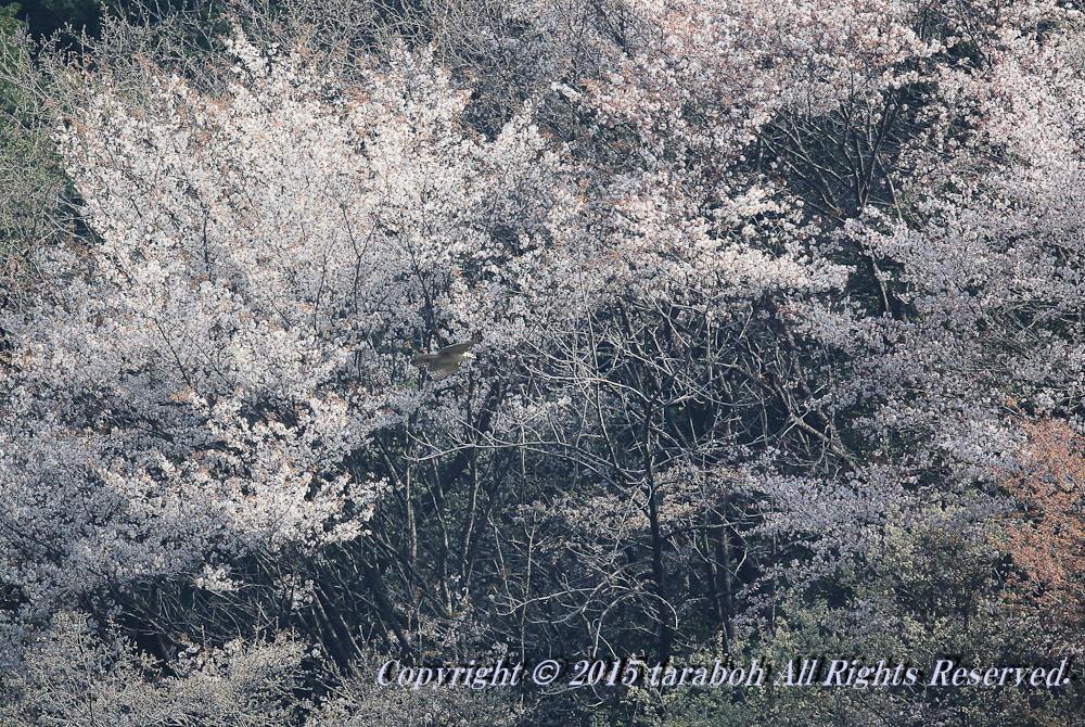 20150418-5D_00674.jpg