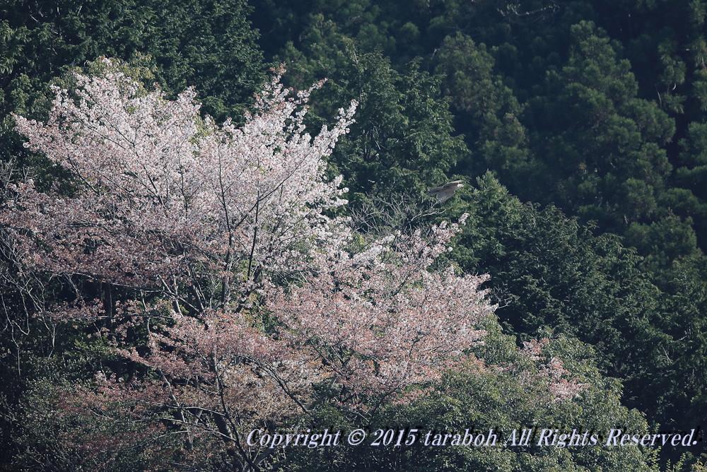 20150418-5D_00685.jpg