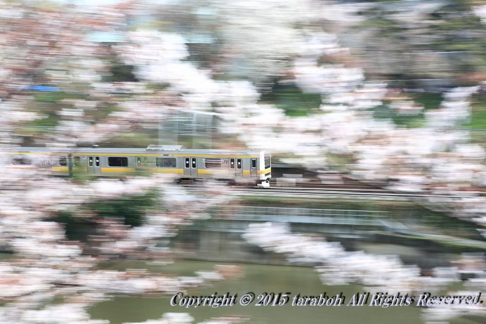 20150419-5D_00182.jpg