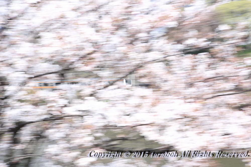 20150419-5D_00274.jpg