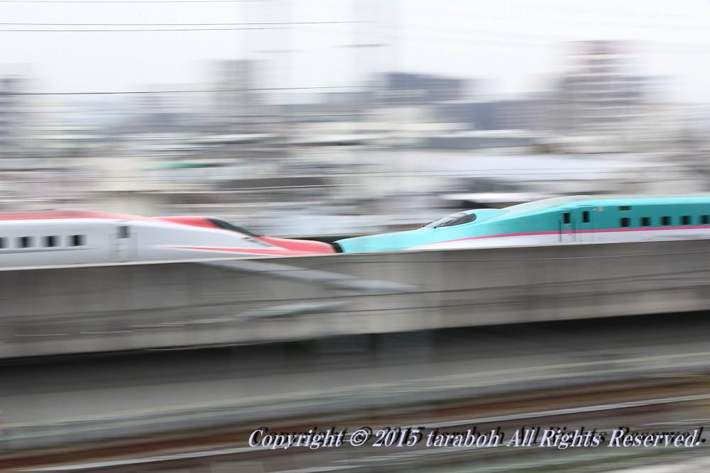 20150419-5D_00404.jpg