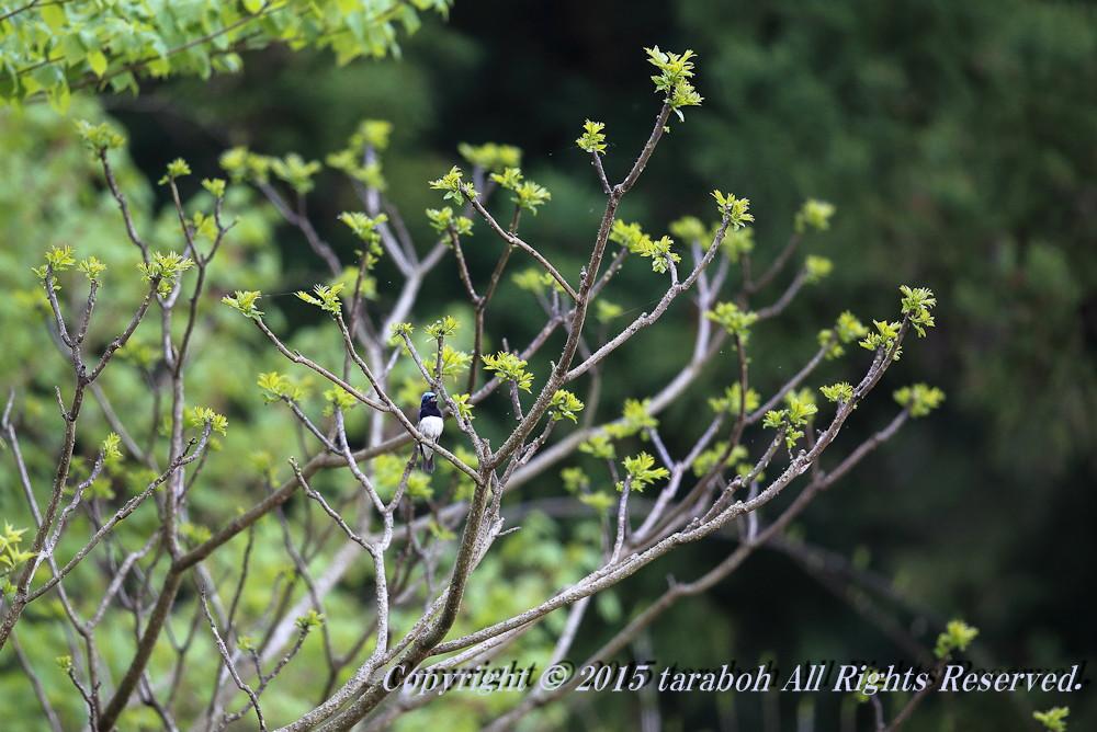20150428-5D_00812.jpg
