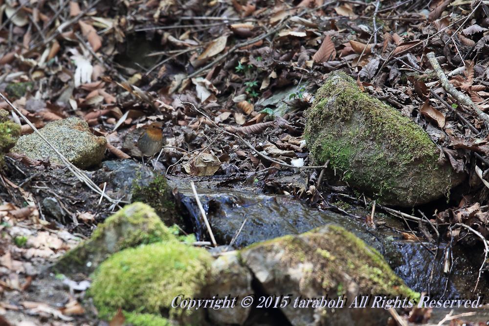 20150502-5D_01296.jpg