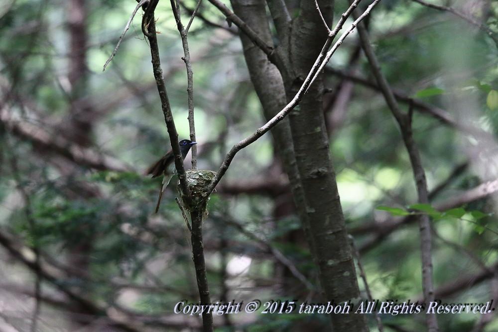20150608-5D_03328.jpg
