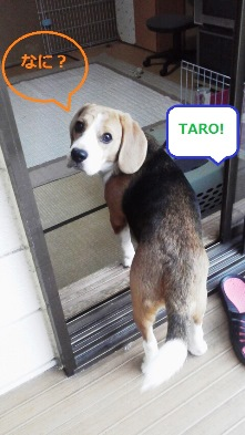 振り向く太郎くん