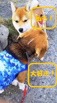 花ちゃん3
