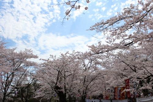 桜0001_2