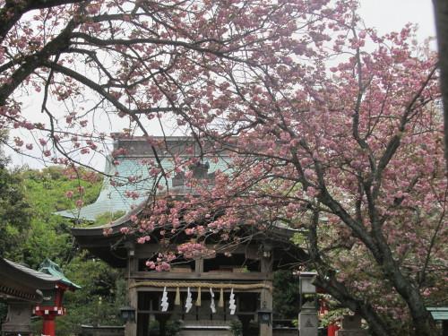 江島神社0001