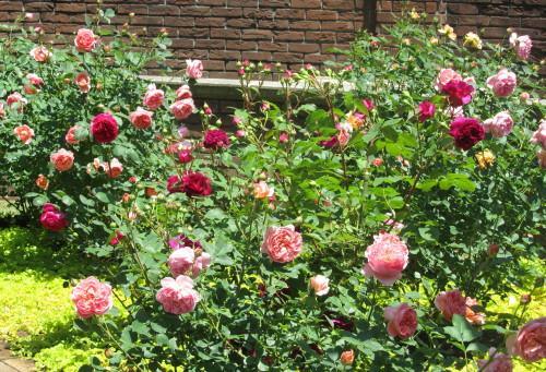 秘密の花苑0001_1