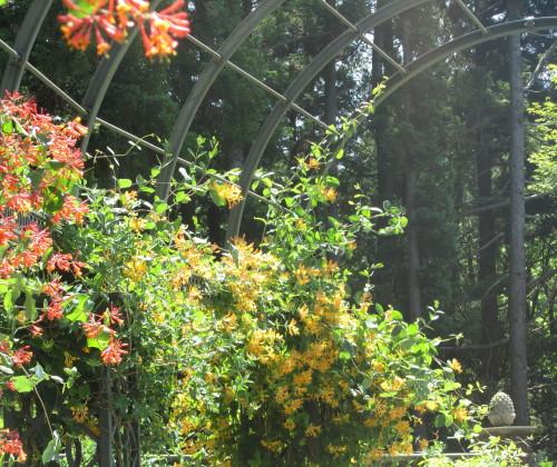 秘密の花苑0001_9