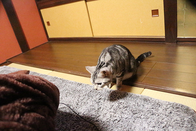 blog_000005540.jpg