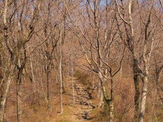 s02明るい登山道2