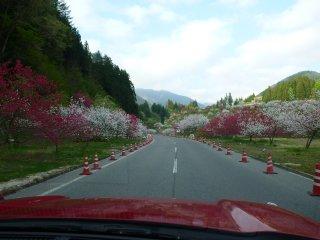s01花桃祭り