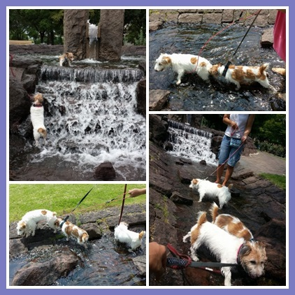 cats667yh.jpg