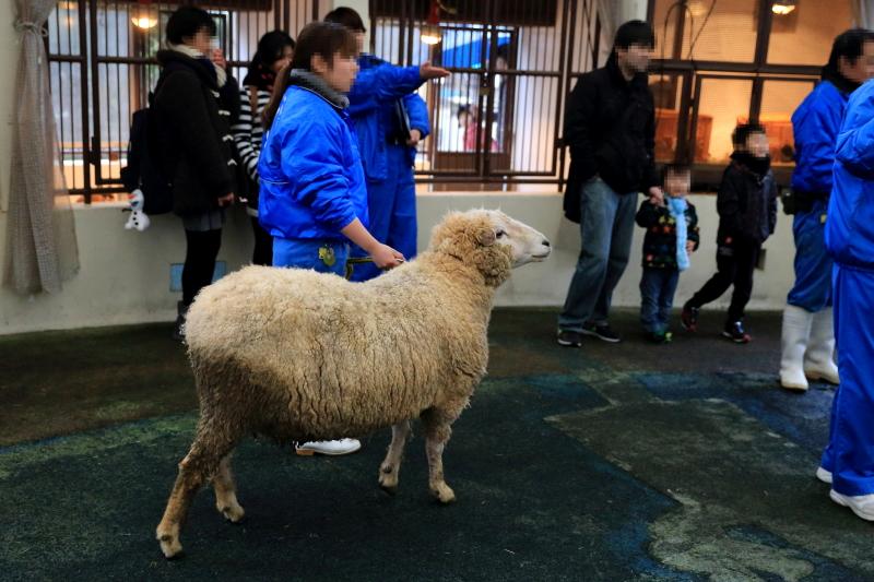 干支おくりイベントの主役であります羊さんです。