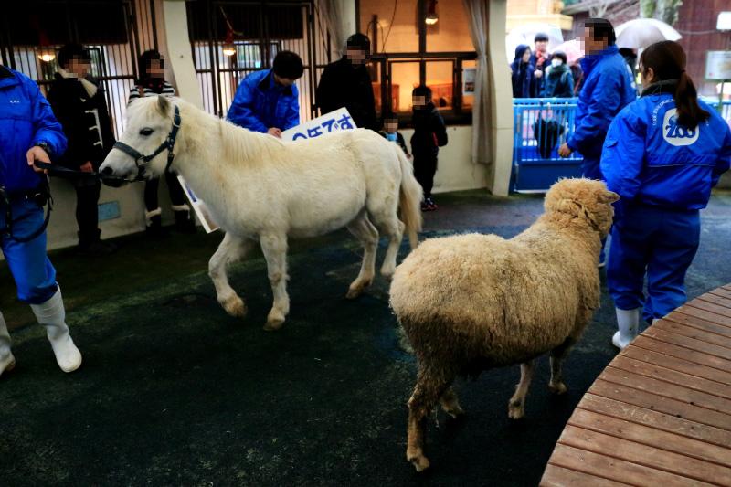 ポニーさんと羊さんです。