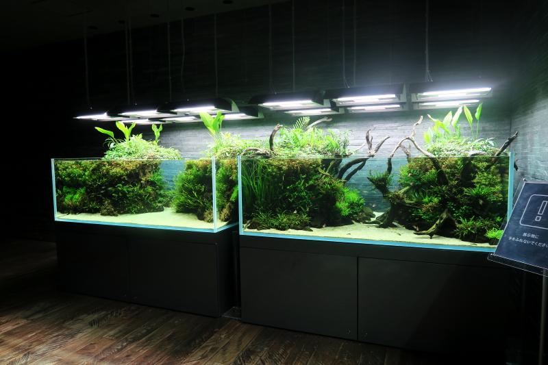 すみだ水族館にADAの巨大な水槽、とってもスゴイ!