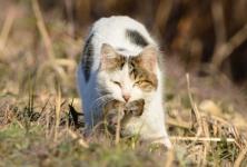 ネコ・ネズミ