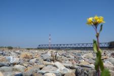 思川・両毛線鉄橋