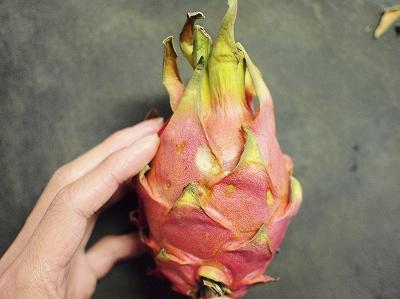 ドラゴンフルーツ1