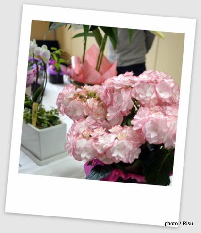 イイハナ・ドットコム母の日花鉢