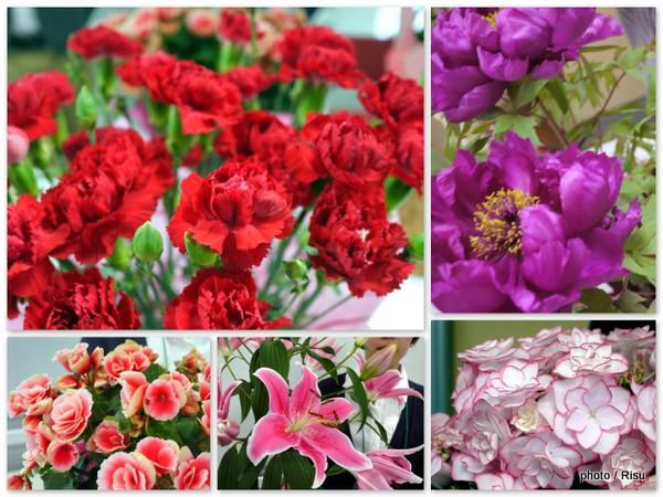 イイハナ・ドットコム母の日「花鉢」