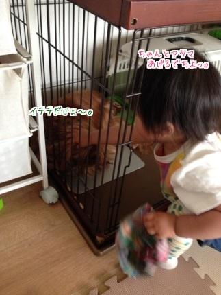 嵐丸 2015.5.20-3