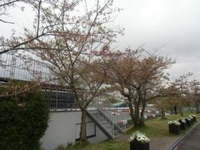 15-0412桜