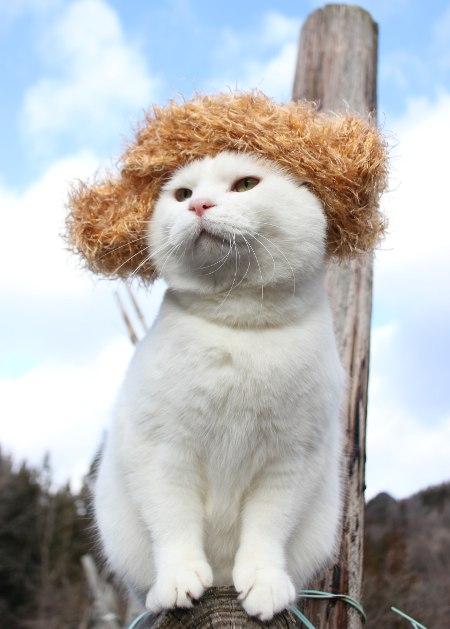かつら金髪?