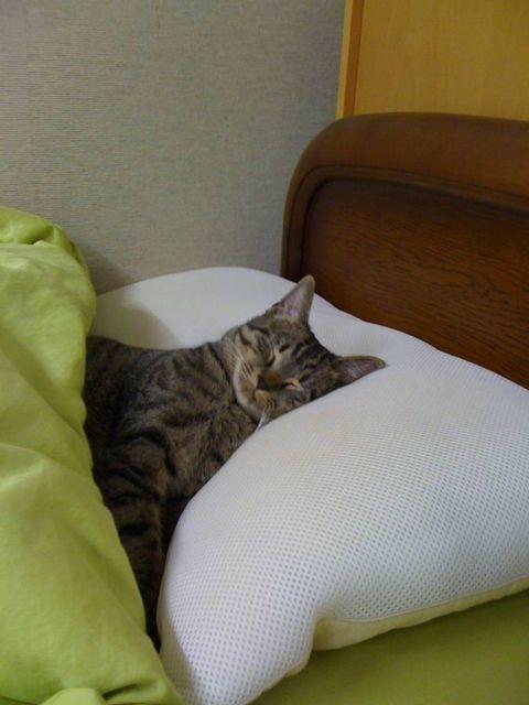 ベッドでおやすみzzz