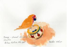 小桜インコのジュディア 壺