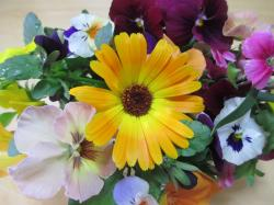 ベランダの花