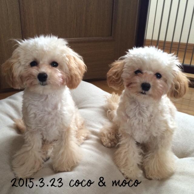 2015.3.23 ココ&モコ6ヶ月