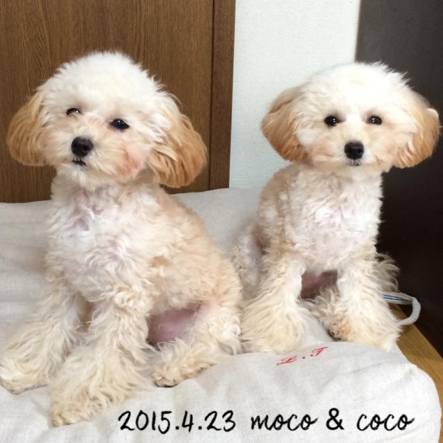 2015.4.23 モコ ココ 7ヶ月