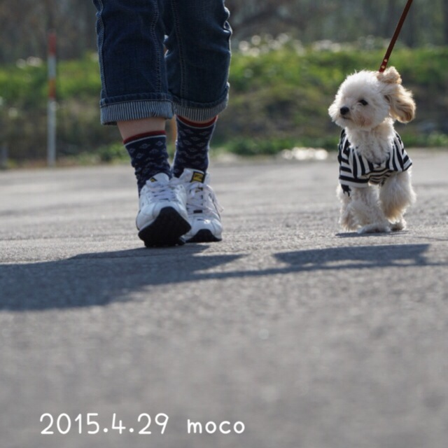 2015.3.29 北斗市お散歩モコ