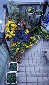 入口の春2