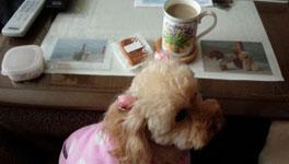 お茶を始めると…
