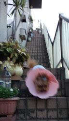 帰宅の階段フリー2