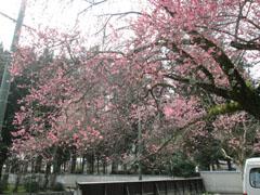 春のお出掛けの記録1