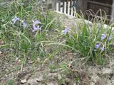 春のお出掛けの記録4