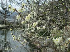 春のお出掛けの記録16
