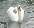 白鳥&鴨1