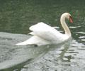 白鳥&鴨3
