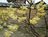 春のお出掛けの記録21